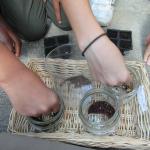 Atelier décorticage des graines