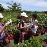 Visite de la Pépinière qui produit les 100 000 plants pour le projet