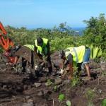 Travaux de plantation