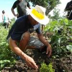 La plantation est une étape délicate pour les jeunes arbres