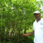 Grande Montagne - Ile Rodrigues
