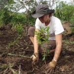 Nathalie prend bien soin de ce Bois dur (Securinega durissima)