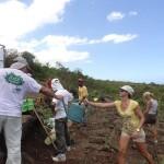 Après la plantation, très important : l'arrosage