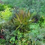 Jeunes plants endémiques