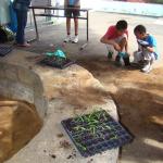 Atelier de rempotage : les plantes ont besoin d'un plus grand pot