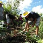 Au travail pour planter les arbres indigènes et endémiques