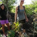 Les postiers volontaires sont prêts à planter les arbres endémiques, comme ce Bois de chandelle