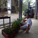 A la découverte des espèces végétales de la forêt semi-sèche